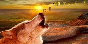 Coyoteee3
